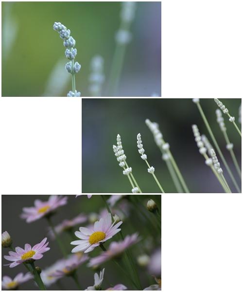 20116月 花フォト.jpg