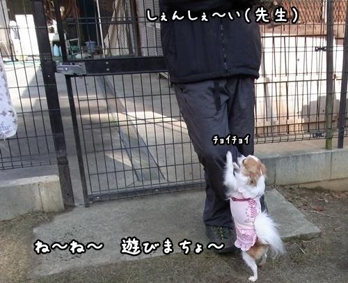 9甘え上手ぶりん.JPG
