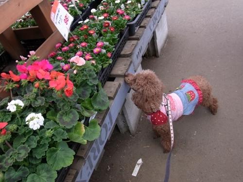 お花とクラリス.JPG