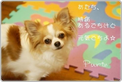 キラキラぷりん1.JPG