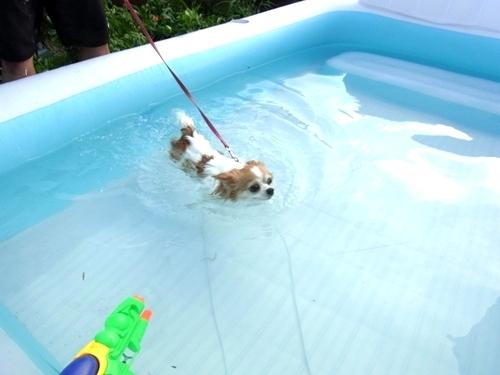 水泳~ぷりん.JPG