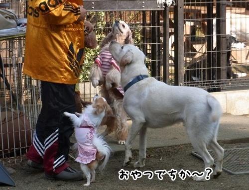 7食いしん坊.JPG